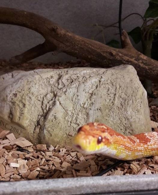 snake-lindsay1
