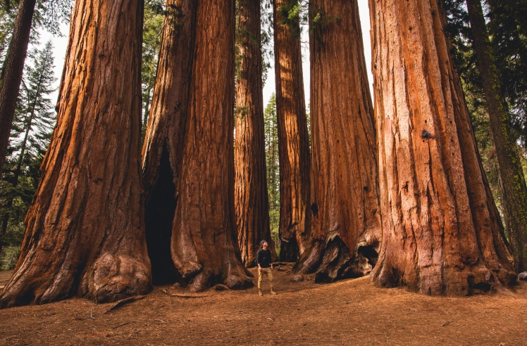 seq park trees